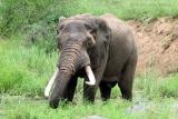Elephant refreshment