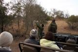 Open safari vehicle gameviewing