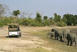 Game drive in Chobe, Botswana