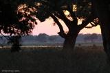 Tree canopy at Mana Pools