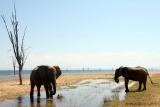 Lake Kariba elephants