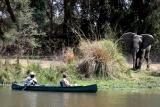 Canoe game viewing lower zambezi