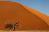 Burnt-orange dunes of Sossusvlei