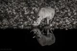 Rhino at night