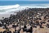 1000s seals and pups, cape cross