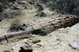 Petrified forest namibia
