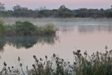 Morning mist kavango river