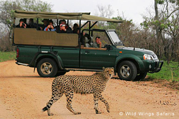 Open vehicle game drives, Kruger National Park