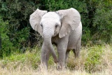 Baby elephant at addo national park