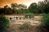 Walking Safari, Balule Private Reserve, Greater Kruger