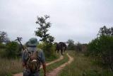 Elephant ahead