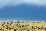 Herds under stormy skies