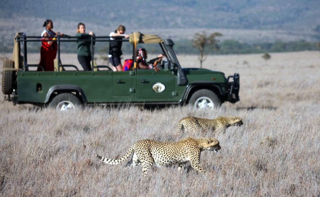 Cheetah on Sirikoi game drive