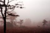 Early morning mist at Laikipia, Kenya