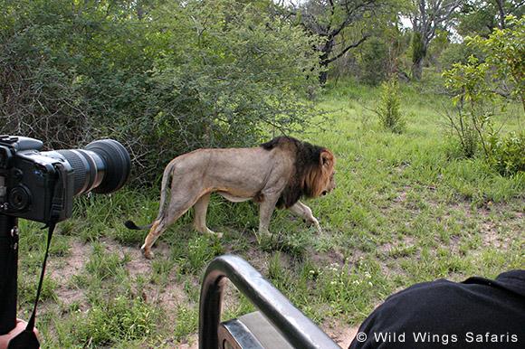 Open vehicle game drives, Kruger National Park