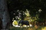 Elephant enjoying shade at mana pools